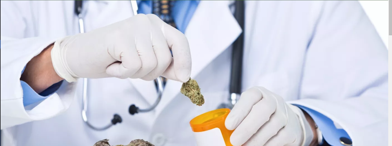 Certified Marijuana Doctors, Tampa, Florida
