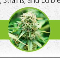 Healthy Education Society - Alternative Medicine Treatment - Medical Marijuana Shop